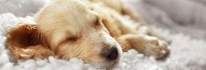 sommeil de mon chien
